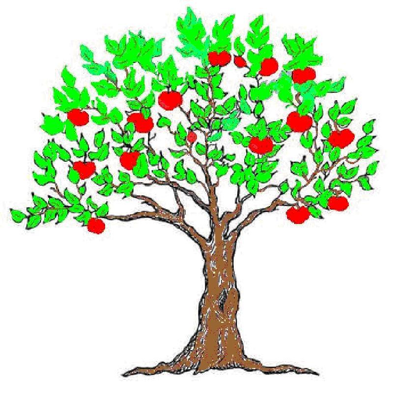 Как нарисовать ветку цветущей яблони